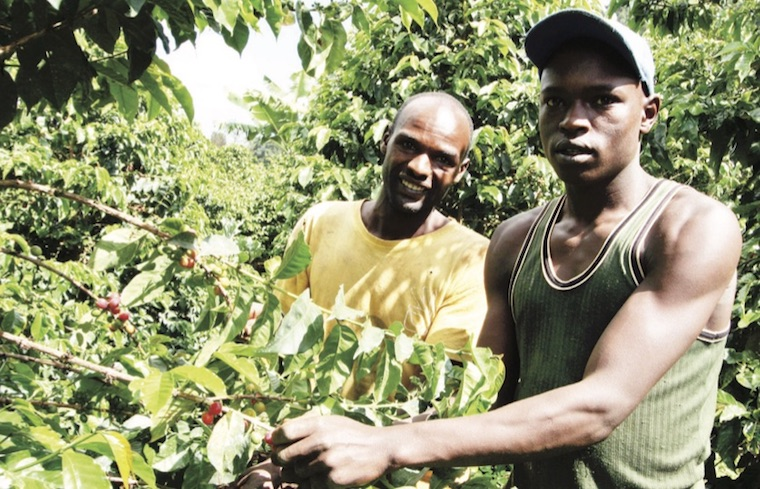 Coffee farmers during a harvest