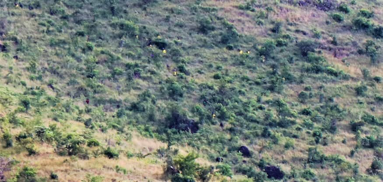The escapees seen on the slopes of Mt Moroto